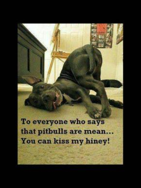 What was that about Pit Bulls being dangerous again?