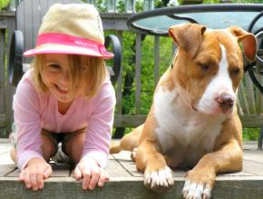 Pit Bulls – Best FriendsForever