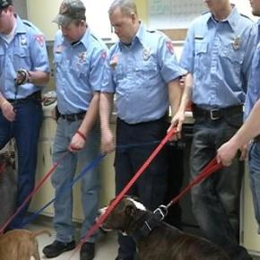 Firefighters Reunited with Six Pit Bulls Rescued fromFire