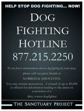Let's Put an End to Dog Fighting