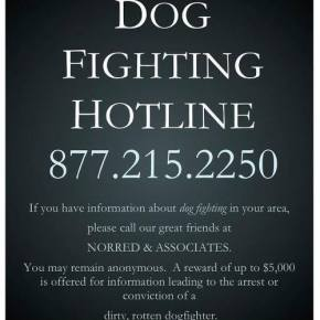 Let's Put an End to DogFighting