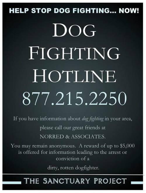 dog fighting hotline
